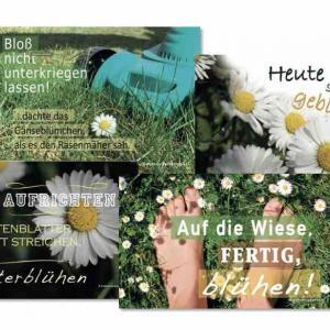 postkarten-gänseblümchen